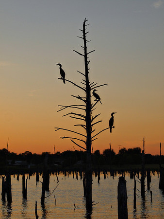 Cormorant silhouette on Lake Fork, TexasOrder Code: A5